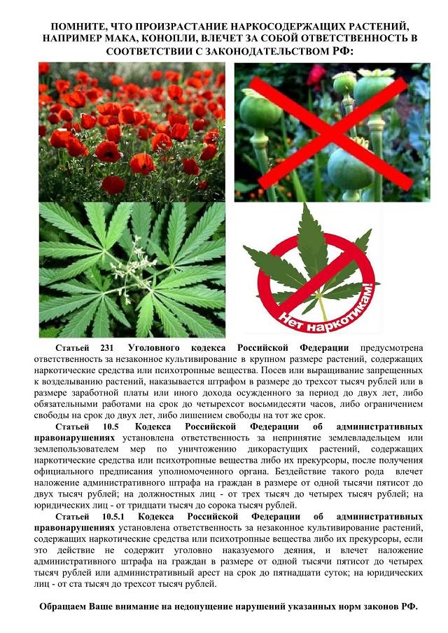 Статья за марихуаны как сделать раствор из конопли